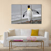 King Penguin walking on the beach. Multi Panel Canvas wall Art