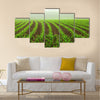 Rows of young corn plants on a moist field in a misty morning Multi panel canvas wall art
