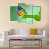 Butterfly Multi Panel Canvas Wall Art