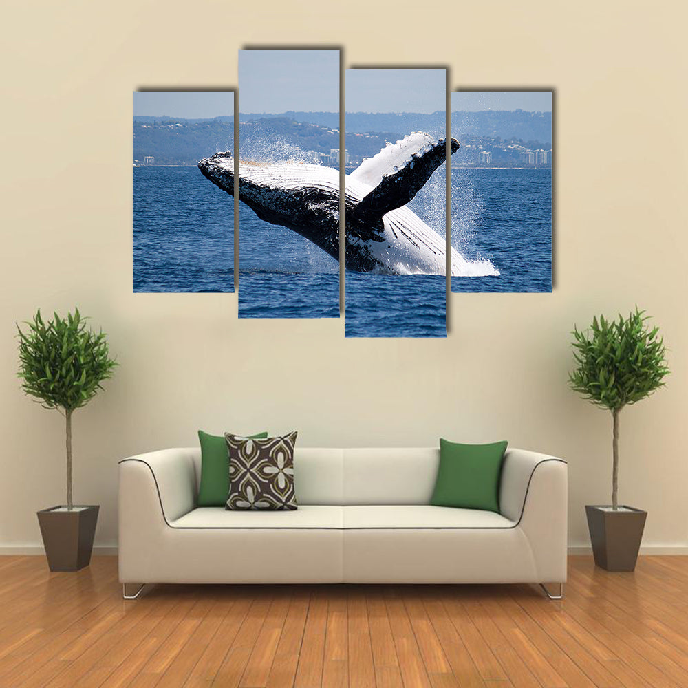 Humpback Whale Breaching Off Australian Coast Multi Panel Canvas Wall Art