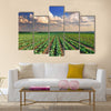 Sunrise over the cabbage field Multi panel canvas wall art