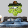 Golf ball on tee in front of driver hexagonal canvas wall art