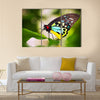 A beautiful male Cairns Birdwing Butterfly (Ornithoptera euphorion) Multi Panel Canvas Wall Art