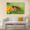 Monarch butterfly (Danaus plexippus) on orange garden flowers Multi Panel Canvas Wall Art