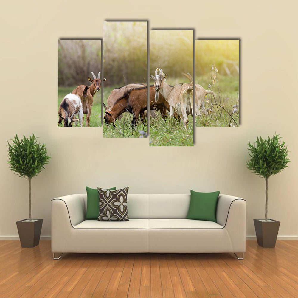 Herd of Alpine Goats Grazing on Meadow and Looking at Camera Multi Panel Canvas Wall Art