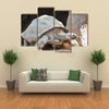 Giant Big Galapgos Earth Tortoise Turtle on the Floor Multi Panel Canvas Wall Art