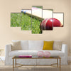 New cricket ball and bat on green grass Multi panel canvas Wall art