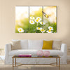 Butterfly on white daisy flowers Multi Panel Canvas Wall Art