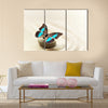 Butterfly Prepona Laerte on the sand Multi Panel Canvas Wall Art