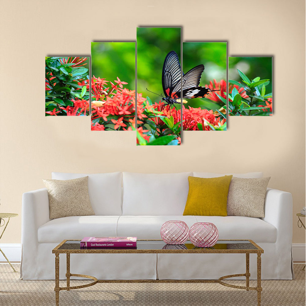 Close up of mail related to perching on red butterfly Multi Panel Canvas Wall Art