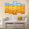 Fields of ripe yellow wheat ready for harvest Multi panel canvas wall art