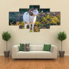 Texas Dall Sheep Ram Standing Tall Looking To The Right Multi Panel Canvas Wall Art