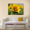 Monarch and a bee on a sunflower Multi Panel Canvas Wall Art
