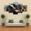 Three Fighting dogs, one Pit Bull Terrier and two Belgian Shepherds Malinois Multi Panel Canvas Wall Art