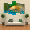 Tropical Golden Fish in Aquarium Multi Panel Canvas Wall Art