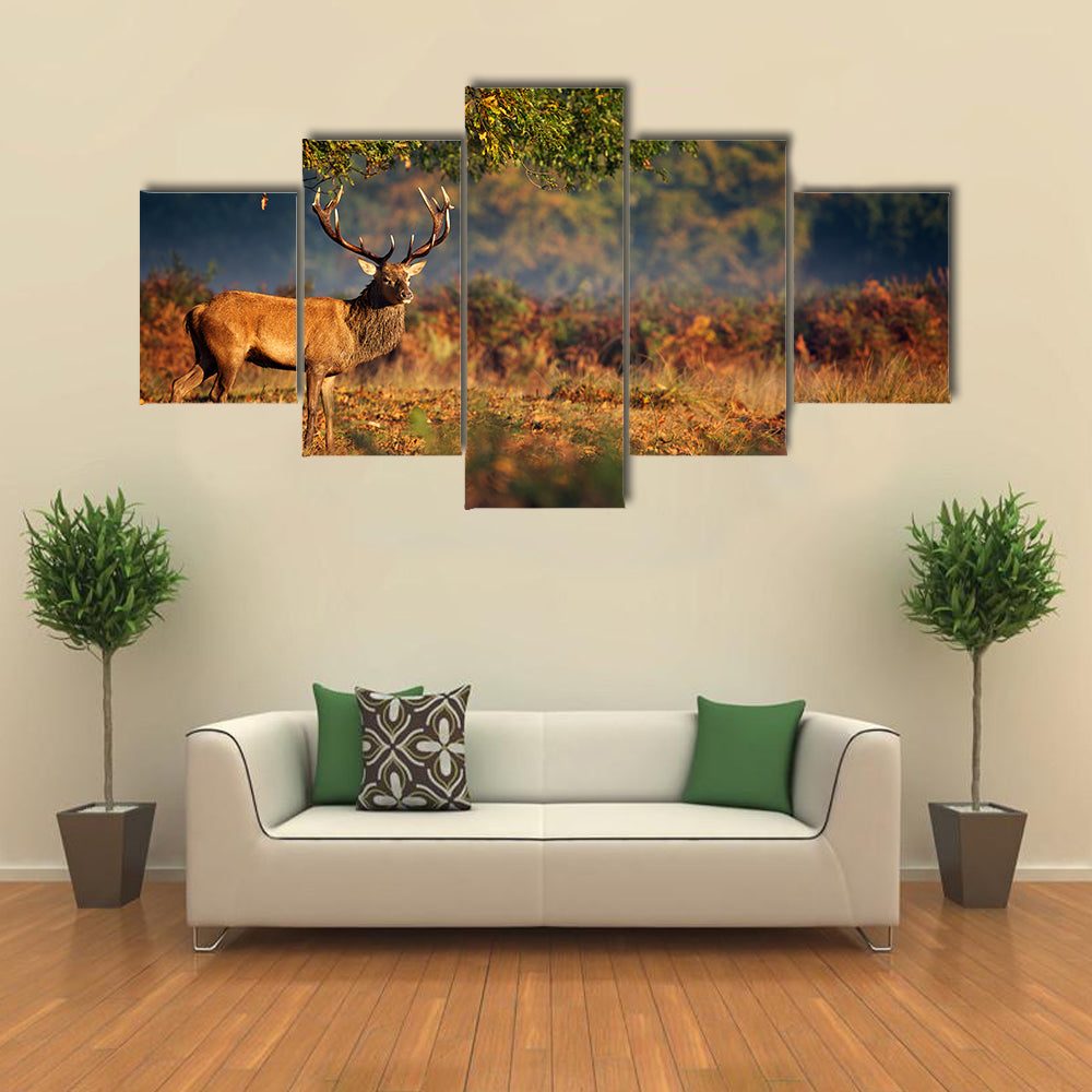 Large Red Deer Stag in Autumn Multi Panel Canvas Wall Art