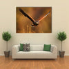 Flying bird of prey, Harris Hawk, Parabuteo unicinctus, in grass Multi Panel Canvas Wall Art