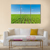 Growing corn field, green agricultural landscape Multi panel canvas wall art