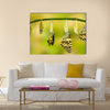 Transformation of Lime Butterfly ( papilio demoleus ) Multi Panel Canvas Wall Art