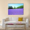 Lavender Flower Fields in Hokkaido, Japan, Wall Art