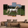 Pride runs the horse across the riding arena multi panel canvas wall art