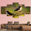 Two puffins on island in sunset light, Faroe Islands Multi panel canvas wall art