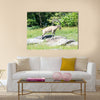 The nubian ibex is a specie of goat Multi Panel Canvas Wall art