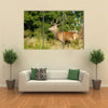 Rut time, Red Deer, Deer, Cervus elaphus Multi Panel Canvas Wall Art