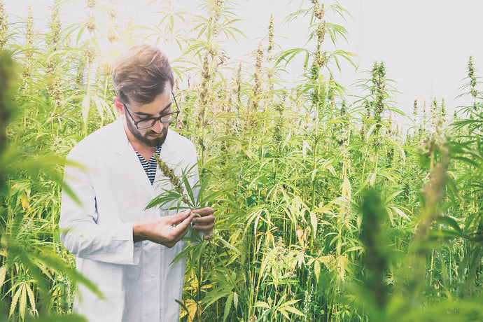 Cannabidiol CBD : Your top 5 Questions answered