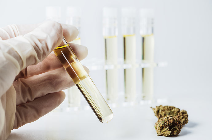 CBD Oil : How is it made?