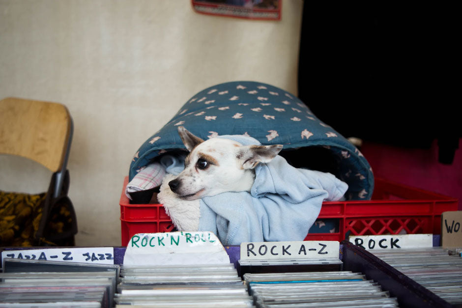 Vinyl records stored A-Z with dog in background