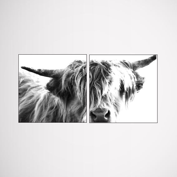 Double Head-On Scottish Cow wall art print Wall Art Print - Yorkelee Prints Australia