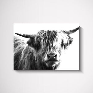 Head-On Scottish Cow wall art print Wall Art Print - Yorkelee Prints Australia