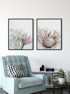 Quinn - Protea and Baby Breath flower wall art print Wall Art Print - Yorkelee Prints Australia