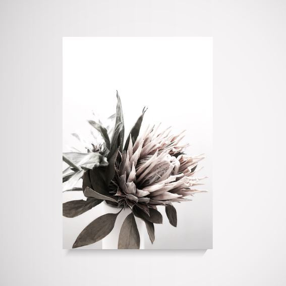 The Styler Protea flower wall art print Wall Art Print - Yorkelee Prints Australia