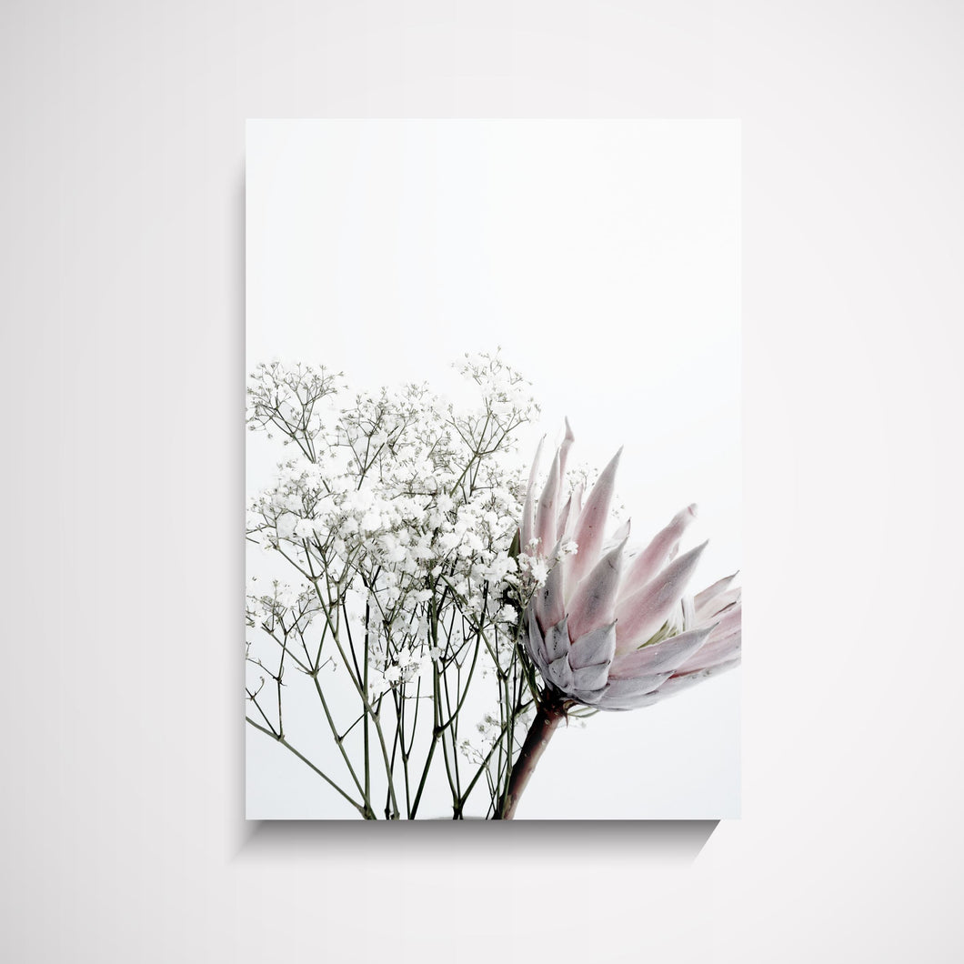 Thea Flower protea pink and grey wall art print Australia