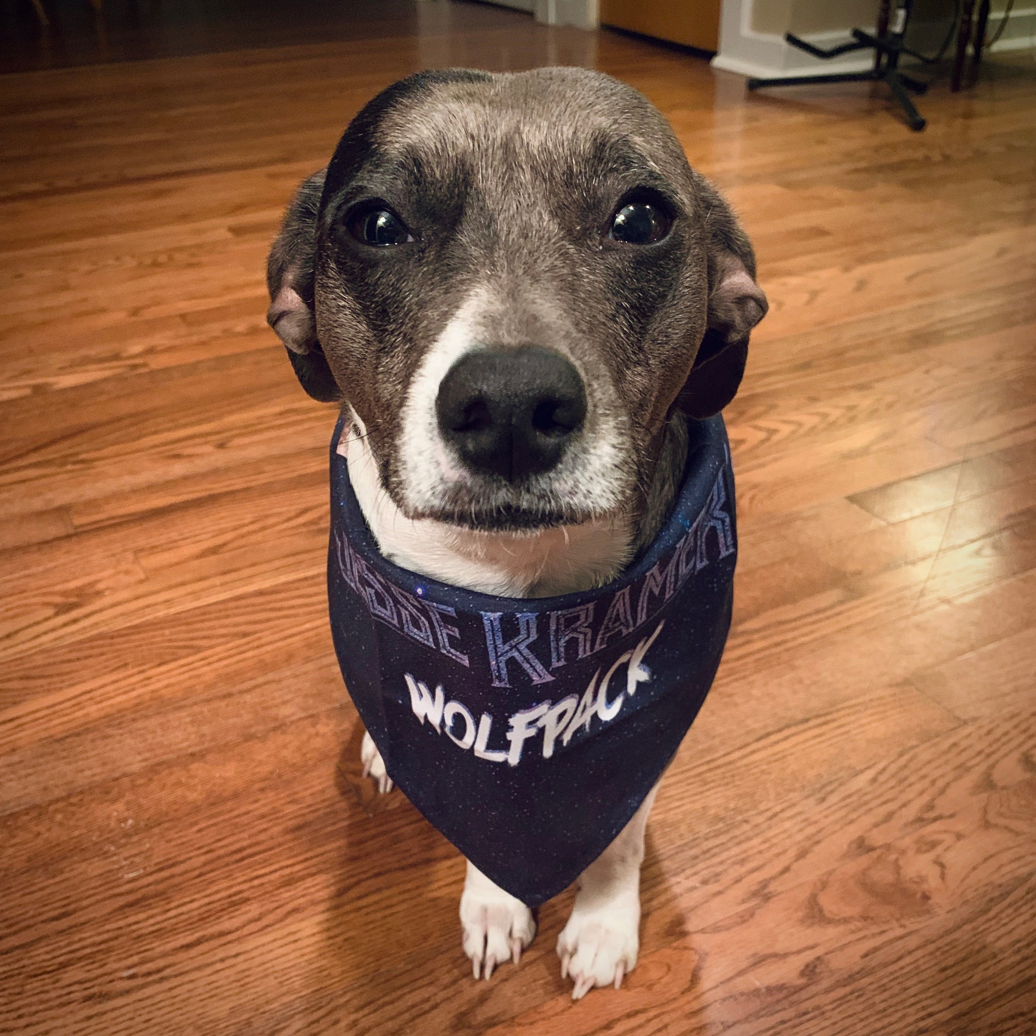 Wolfpack Pet Bandana - Small