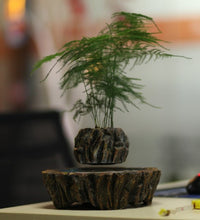 Fantasy Collection Levitating Air-Floating Bonsai Pot - stilyo