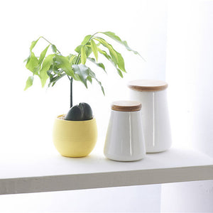Colorful Cute Plant Flower Pot - stilyo