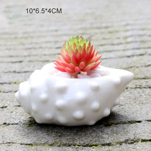 6 Pieces set Mini Shell Shaped Ceramic Planters - stilyo