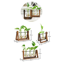 Rustic Plant Terrarium with Wooden Stand - stilyo