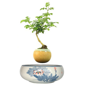 Blue Flowers Ceramic Base Levitating Air-Floating Bonsai Pot - stilyo
