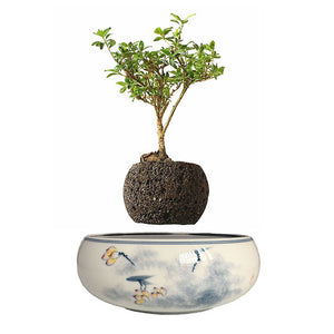 Yellow Flowers Ceramic Base Levitating Air-Floating Bonsai Pot