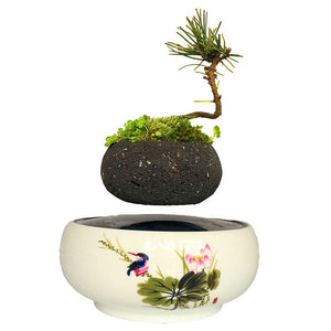 Song Bird White Ceramic Base Levitating Air-Floating Bonsai Pot - stilyo