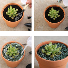 10Pcs Small Mini Clay Pots - stilyo