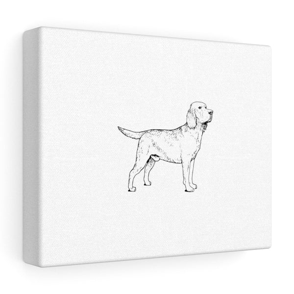 Labrador Retriever Stretched canvas