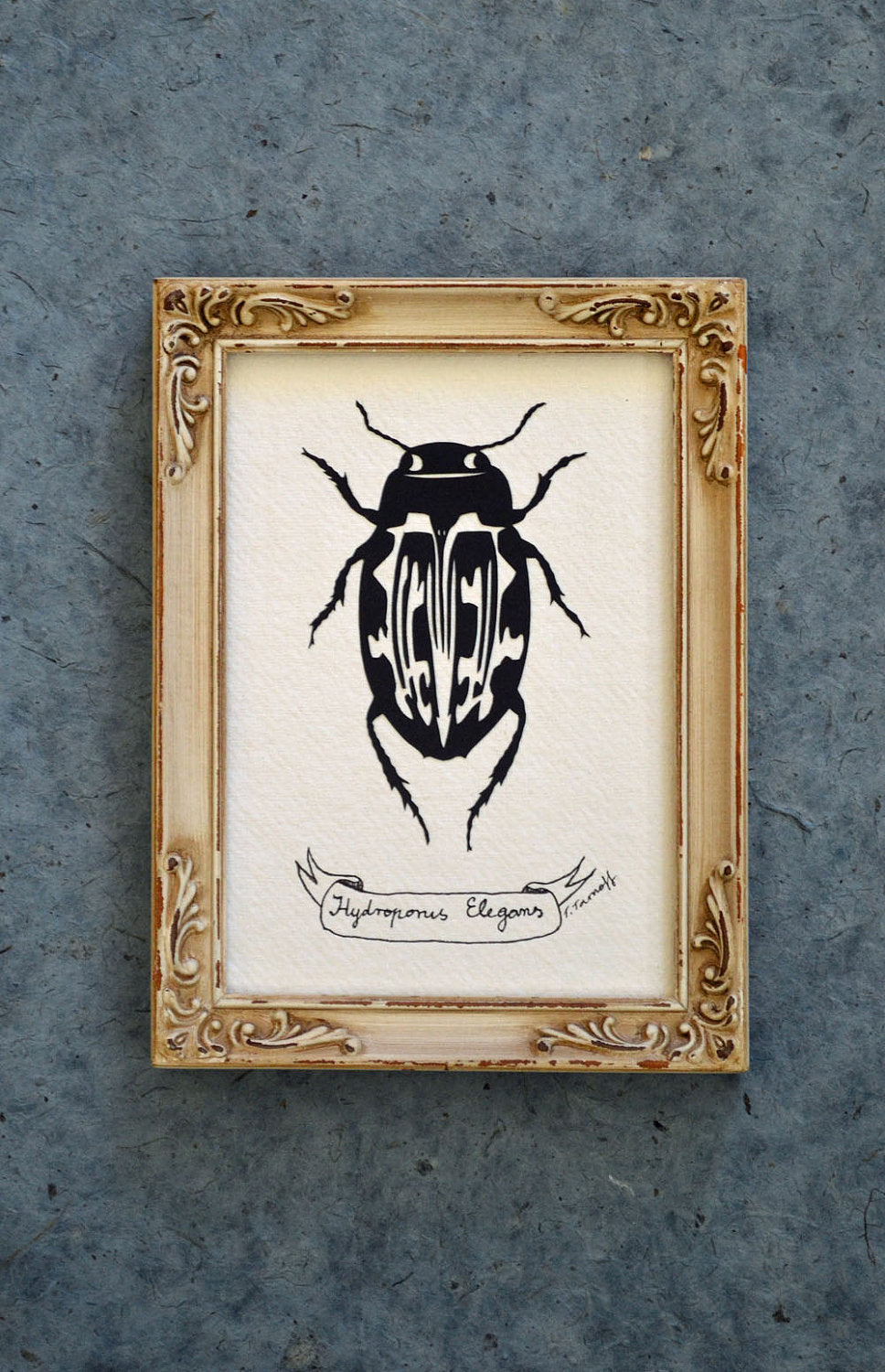 WATER BEETLE Papercut - Hand-Cut Silhouette, Framed