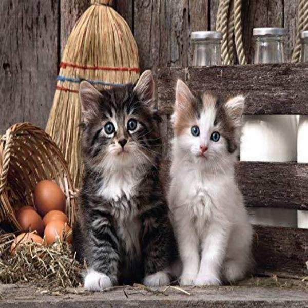 Farm Kittens 5D Diamond Painting Kit