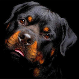 Dog Collection 5D Diamond Painting Kit