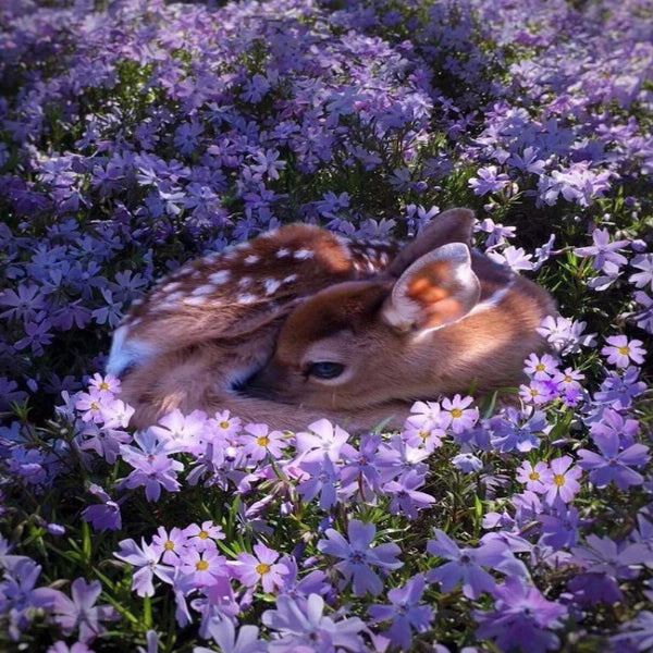 Flowerbed Bambi 5D Diamond Painting Kit
